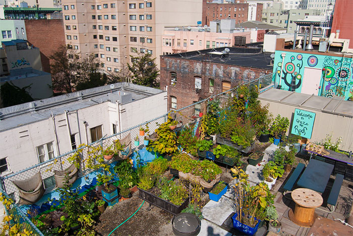 rooftop garden in city