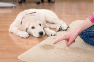 dog messing up carpet